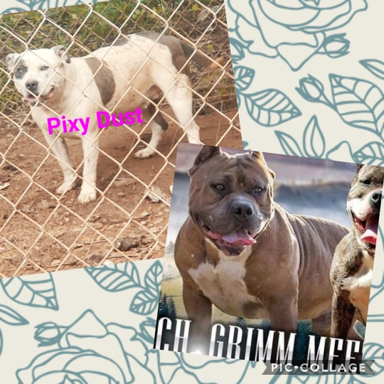 Available Now! - OK Big Star Kennels